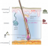 リデンシルの効果・効能と含有育毛剤